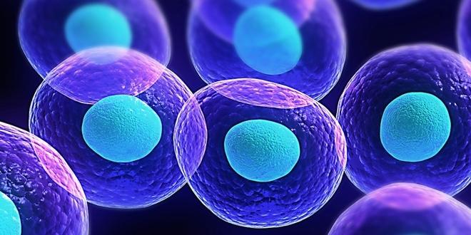 Seminer: Hücrenin Yolculuğu